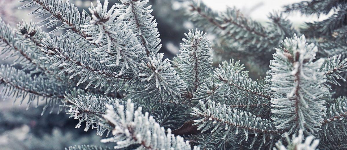 Gdy za oknem zima – felieton do miesięcznika Ogrody
