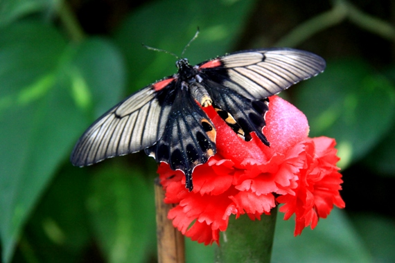 Farma motyli w Trassenheide