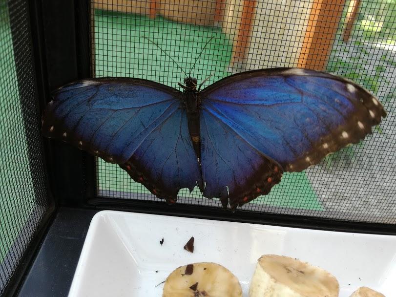 Sezon motylkowy uważam za otwarty