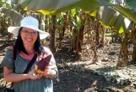 Wyspa bananowa oraz zbiory trzciny cukrowej