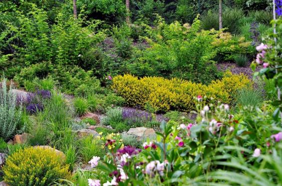 Ogród na skarpie. Jak go założyć i jakie rośliny nadają się na skarpę?