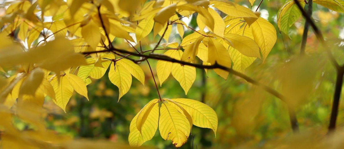 Jesień to bardzo dobry czas na sadzenie drzew i krzewów ozdobnych.