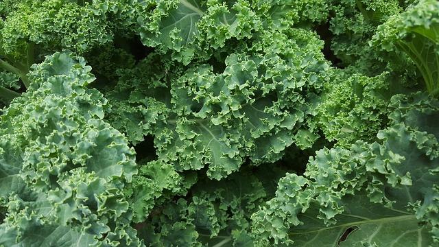 Warzywa zimujące w gruncie