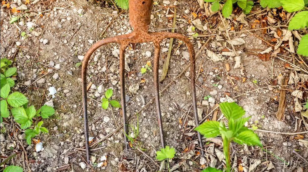 Dzielenie bylin w ogrodzie