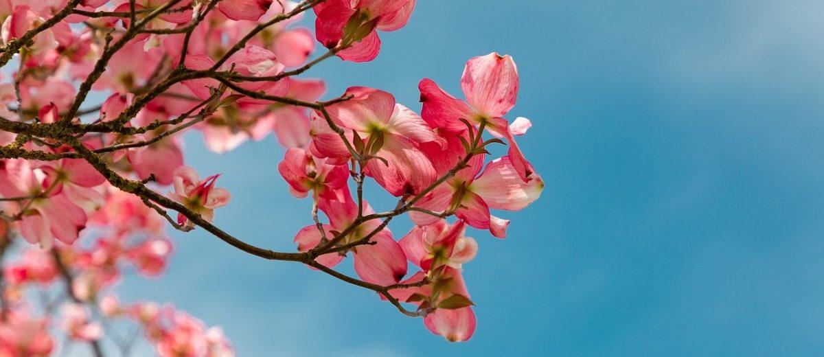 Drzewa i krzewy do małego ogrodu – nasze rekomendacje