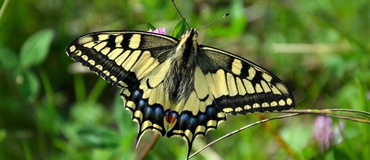 Projekt liczenia motyli