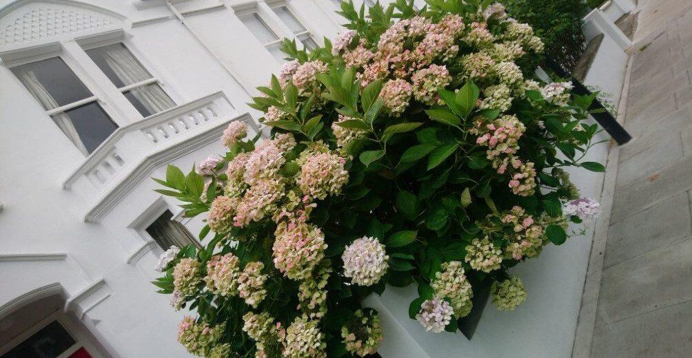 Roślinność w Londynie