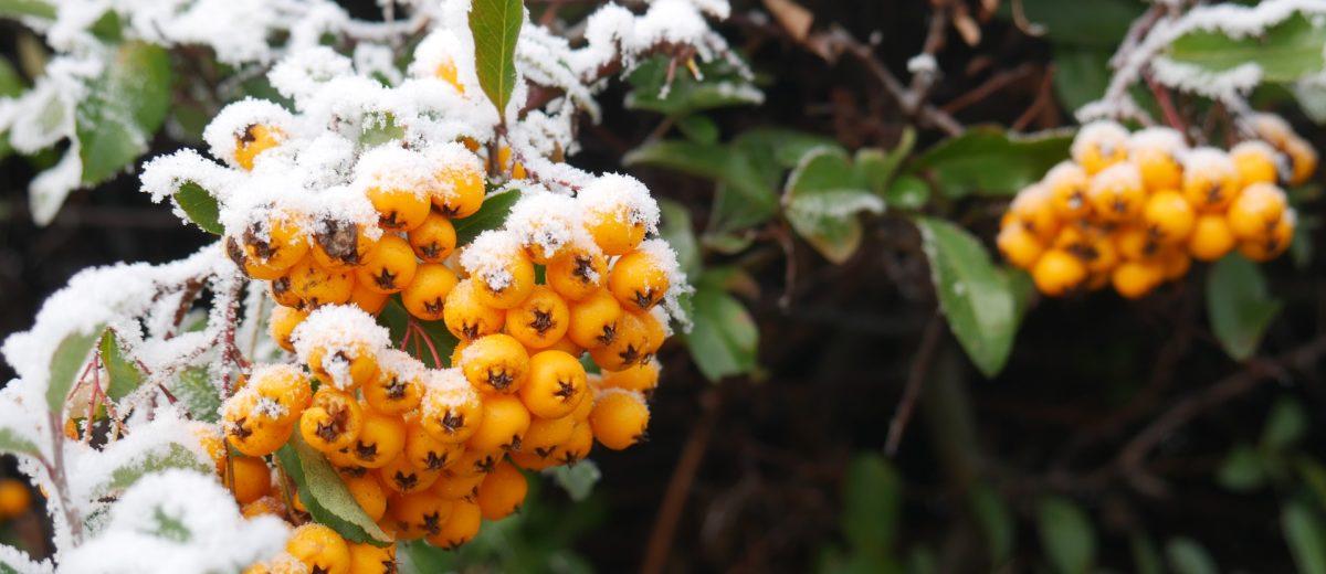 4 pory roku w ogrodzie