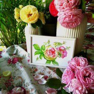 ilustracja botaniczna róża