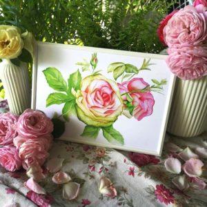 ilustracja róża